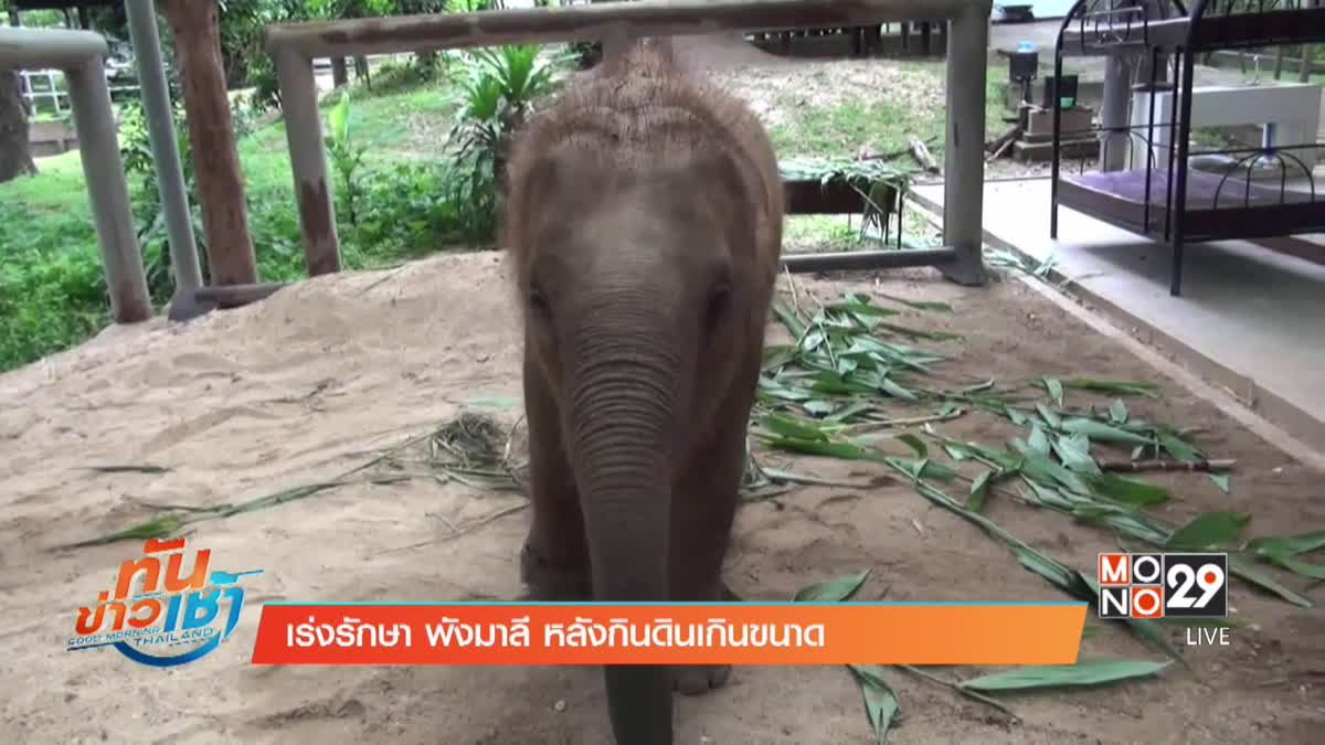 เร่งรักษา พังมาลี หลังกินดินเกินขนาด