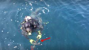 รุมประณามนักดำน้ำ หลังลอบยิงปลาหมอ ในทะเลหมู่เกาะชุมพร