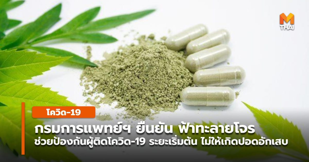 อธิบดีกรมการแพทย์แผนไทยฯ ยืนยัน ฟ้าทะลายโจร ยังใช้ได้กับผู้ป่วยโควิด-19