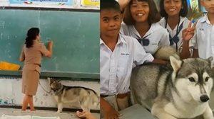 ฮือฮายกห้องเรียน เมื่อครูจำเป็นต้องพาสุนัขมาสอนหนังสือด้วย