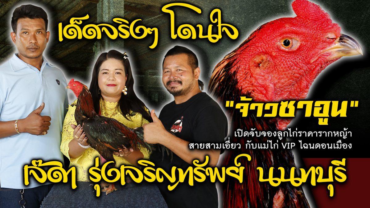 """""""จ้าวซาอูน"""" พ่อพันธุ์หลัก ค่าตัว 100,000 บ. เจ๊ดา รุ่งเจริญทรัพย์ นนทบุรี"""