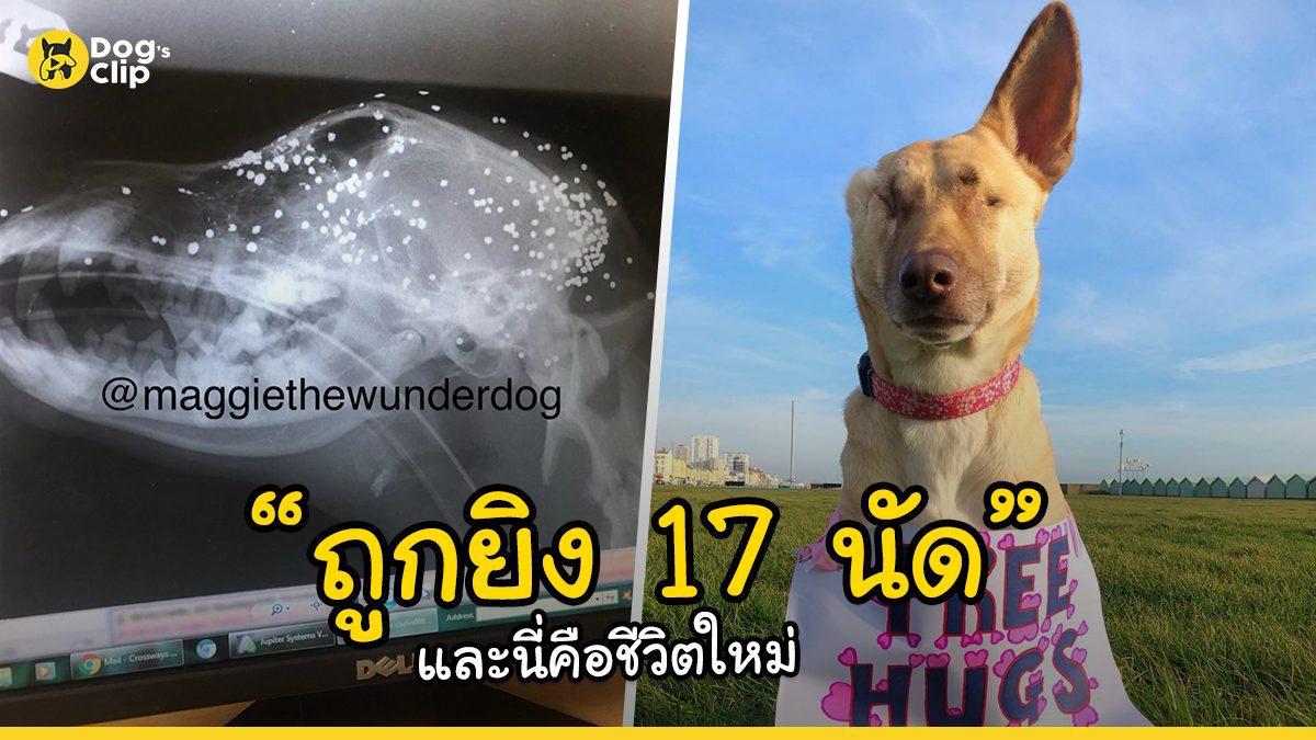 น้องหมาจรจัดท้องแก่ถูกยิง 17 นัดและนี่คือชีวิตใหม่ของเธอ | Dog's Clip