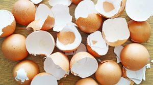 เจ๋งสุดๆ 4 ประโยชน์ของ เปลือกไข่ ที่หยิบมาใช้งานในบ้านได้