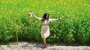 ทุ่งดอกดาวกระจาย สวนเทพมงคล จ.สระบุรี บานรับสายฝนอันชุ่มฉ่ำ