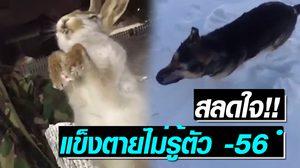 """สะเทือนใจ!! """"กระต่าย-หมา"""" แข็งตายไม่รู้ตัวกลางอุณหภูมิ -56 องศาฯ"""