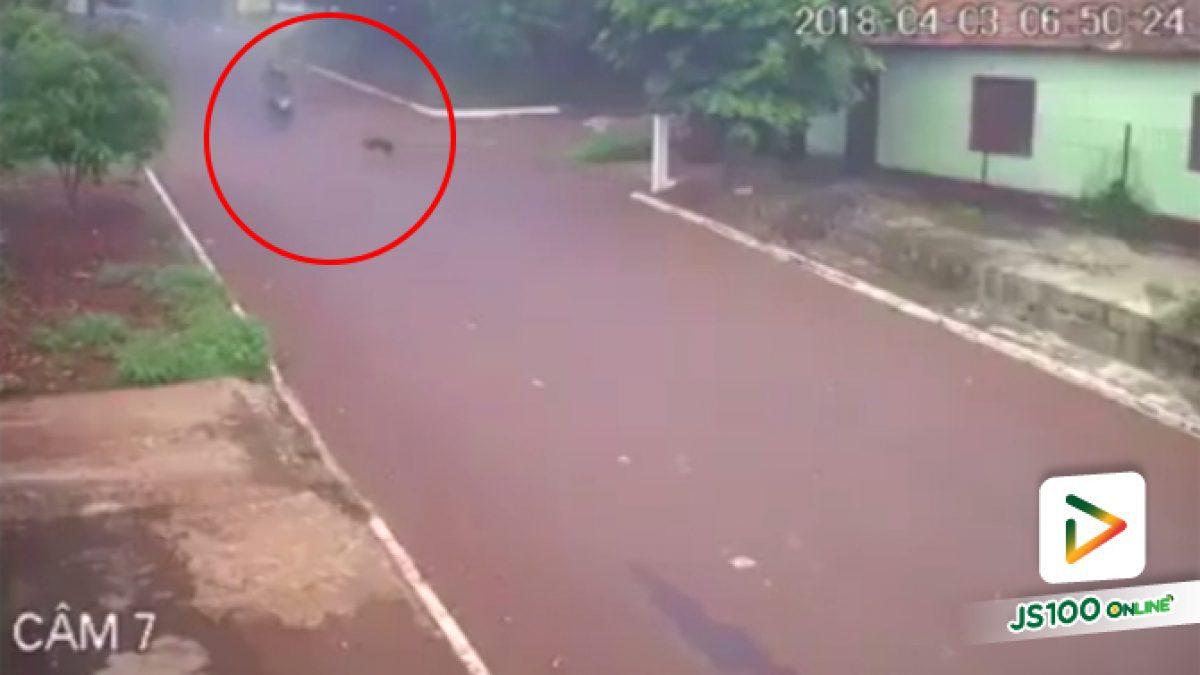 คลิปเจ้าตูบวิ่งออกถนนจยย.วิ่งมาชนเสียหลักล้ม (10-04-61)