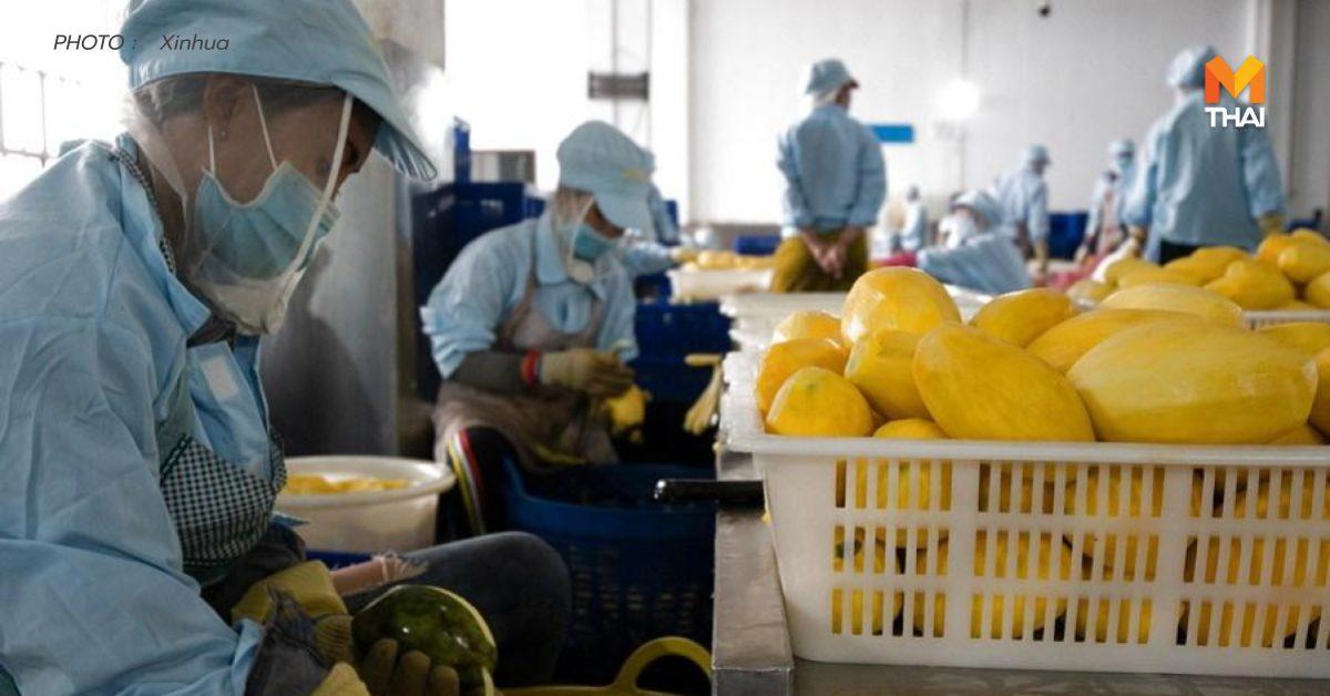 กัมพูชาส่ง 'มะม่วงอบแห้ง' บุกตลาดจีน คาดปีหน้าแปรรูปมะม่วง 4.2 หมื่นตัน