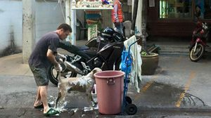 ใจหล่อ! หนุ่มต่างชาติขนน้ำจากคอนโด อาบน้ำให้สุนัขจรจัด