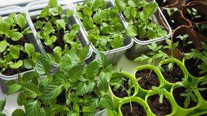 5 เคล็ดลับเพื่อการ ปลูกผักในบ้าน อย่างยั่งยืน