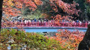 [รีวิว] เที่ยวเมือง Obara ชมดอกซากุระบาน พร้อมใบไม้เปลี่ยนสี ที่ญี่ปุ่น