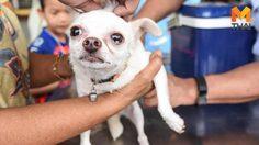พบสุนัขเป็นโรคพิษสุนัขบ้าเพิ่ม 4 ตัว ในพื้นที่ 3 จังหวัด