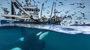 11 สุดยอดภาพถ่ายสิ่งมีชีวิต ที่สุดแห่งปี 2016