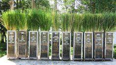 พิพิธภัณฑ์ธรรมชาติที่มีชีวิต สถานที่ฟื้นฟูดิน น้ำ ป่าไม้ จากพระราชดำริในหลวง ร.9