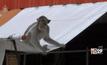 ฝูงลิงแสมวัดป่าบุกร้านค้าชาวบ้าน จ.มุกดาหาร