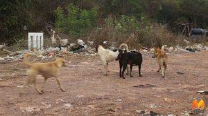 กรมควบคุมโรค เผย พบผู้เสียชีวิตด้วยโรคพิษสุนัขบ้ารายที่ 12 ของปีนี้