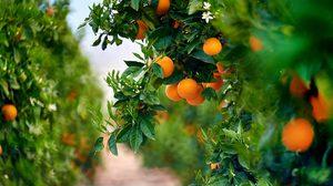 8 เทคนิคปลูกพืชตระกูล ส้ม เลม่อน หรือมะนาวไว้ภายในบ้าน