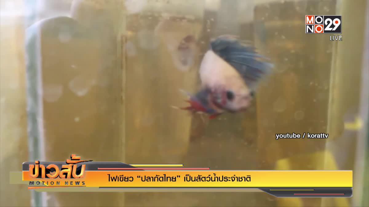 """ไฟเขียว """"ปลากัดไทย"""" เป็นสัตว์น้ำประจำชาติ"""