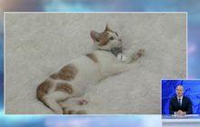 คาเฟ่น้องแมวไร้บ้านในสหรัฐฯ