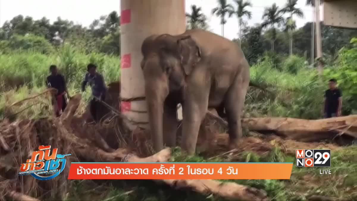 ช้างตกมันอาละวาด ครั้งที่ 2 ในรอบ 4 วัน