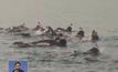 ว่ายน้ำรณรงค์อนุรักษ์ทะเลเดดซี