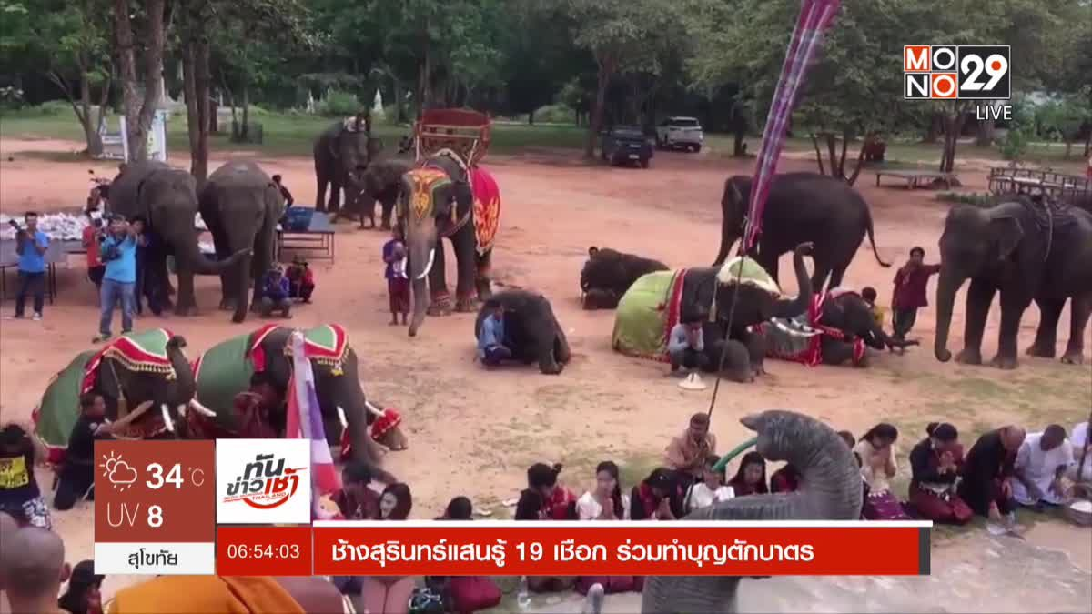 ช้างสุรินทร์แสนรู้ 19 เชือก ร่วมทำบุญตักบาตร