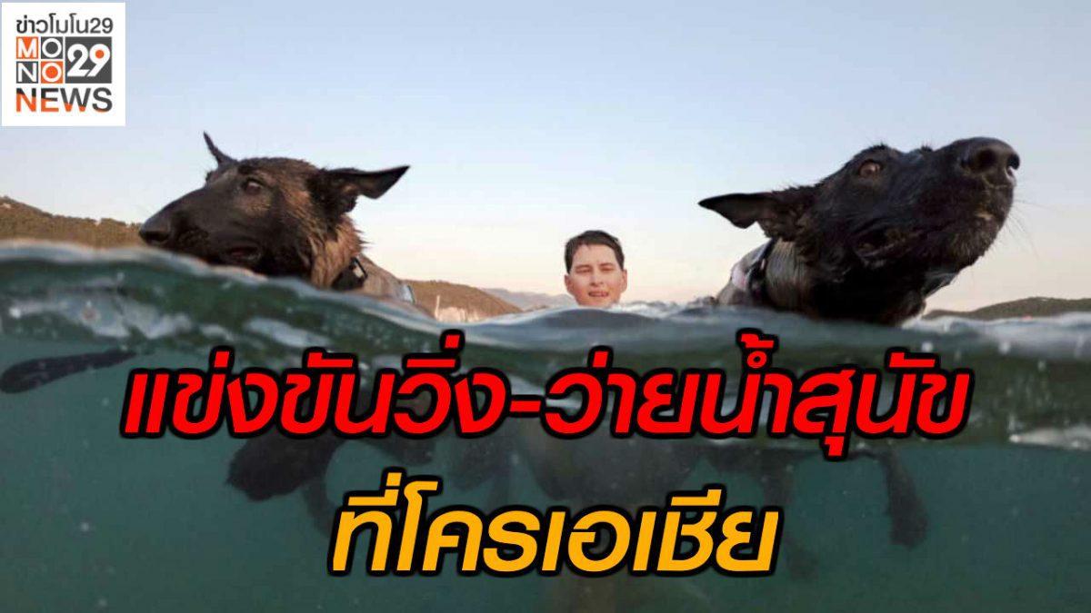#เรื่องเล่ารอบโลก แข่งขันวิ่ง-ว่ายน้ำสุนัข ที่โครเอเชีย