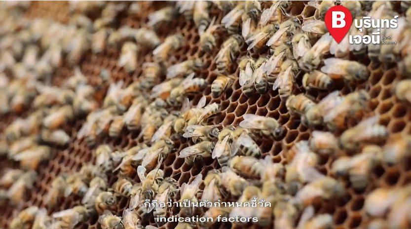 พิษผึ้งเป็นยาบำบัดชั้นดี