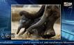 REUTERS : แม่ช้างกำลังช่วยลูกช้างเกิดใหม่ลุกยืนด้วยตัวเอง