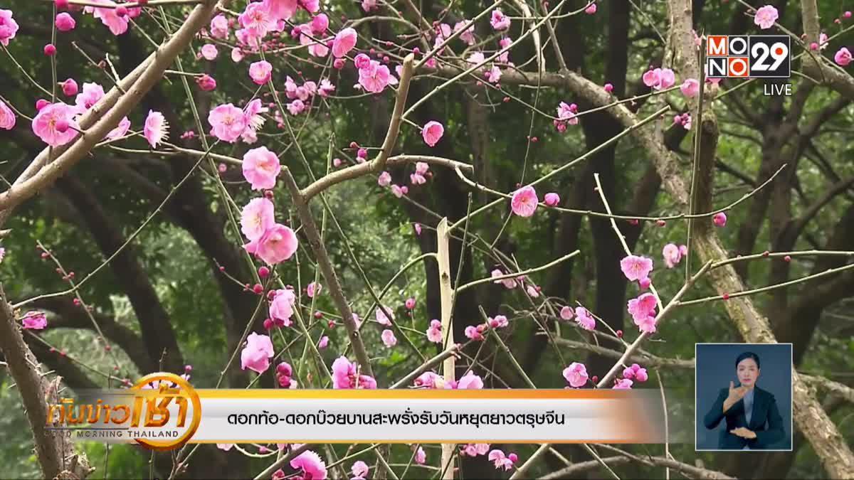 ดอกท้อ-ดอกบ๊วยบานสะพรั่งรับวันหยุดยาวตรุษจีน