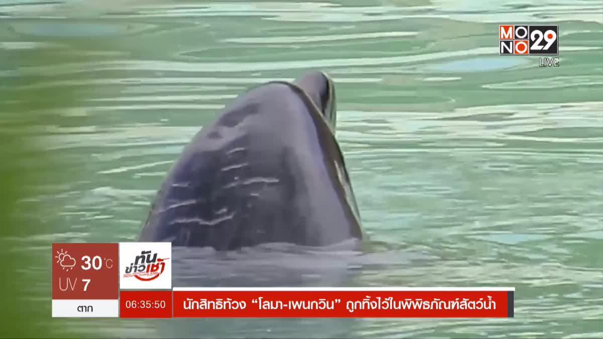 """นักสิทธิท้วง """"โลมา-เพนกวิน"""" ถูกทิ้งไว้ในพิพิธภัณฑ์สัตว์น้ำ"""