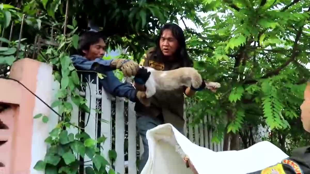 กู้ภัยช่วยแมวถูกรั้วเหล็กเสียบ ชาวบ้านแห่ระดมทุนค่ารักษา