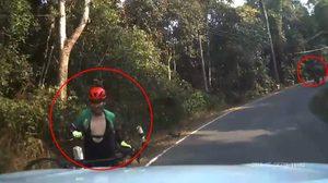 คลิปหนุ่มปั่นจักรยาน ยกรถวิ่งหนีไม่คิดชีวิต หลังเจอช้างป่าวิ่งเข้าใส่