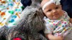 """น่ารักน่าชัง! ทารกน้อย 5เดือนกับเพื่อนรักที่เป็น """" ตัว สล็อต """""""