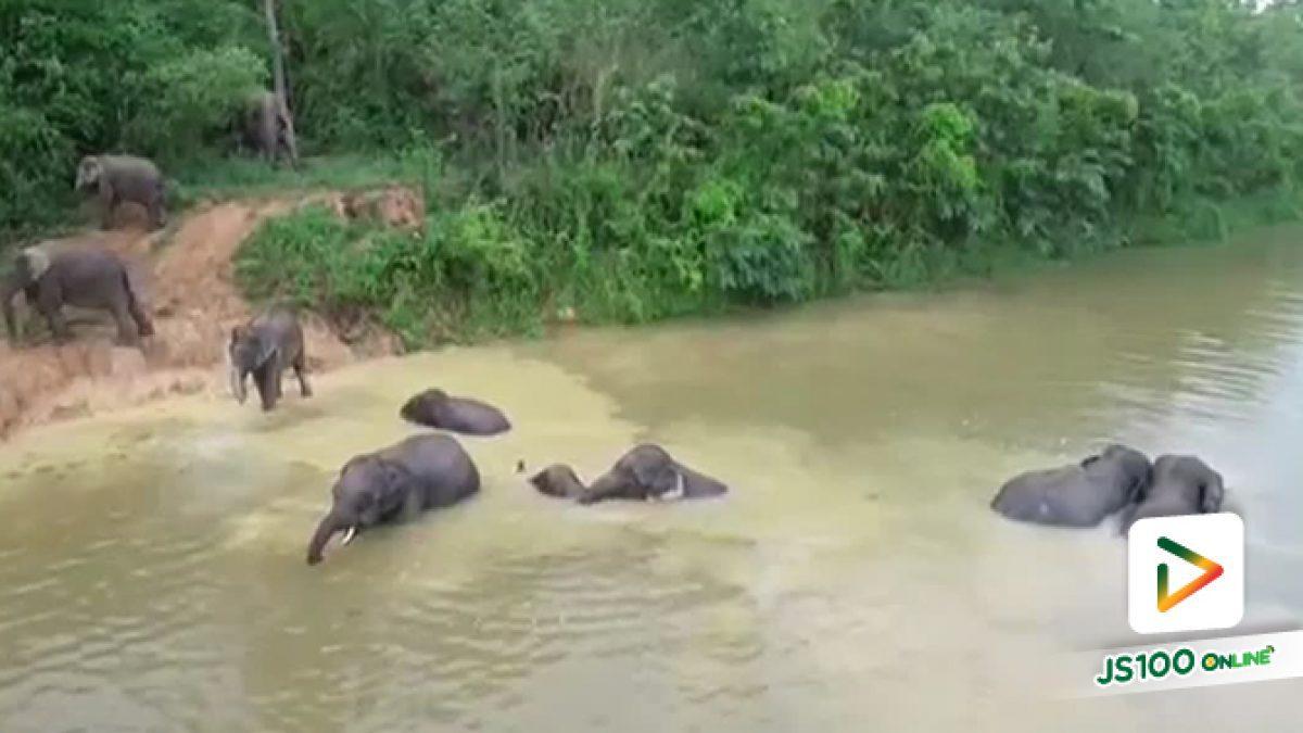 ชมโขลงช้างเดินออกมาจากป่า ลงเล่นน้ำยามเย็นที่อุทยานฯแก่งกระจาน เห็นแบบนี้แล้วมีความสุข...