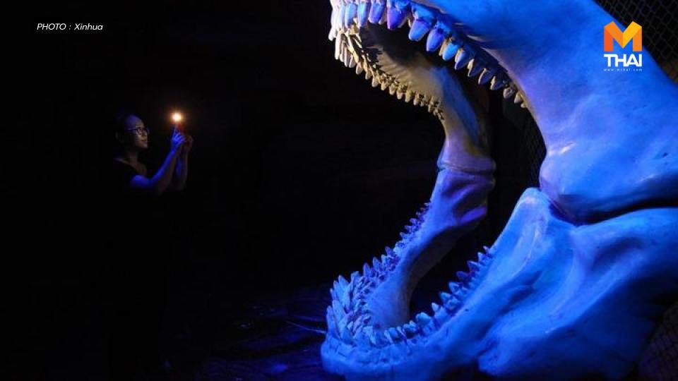 ศุลกากรฉงชิ่ง เจอฟอสซิลฟันฉลามยักษ์แสนปี 'เมกาโลดอน' ในกล่องพัสดุ