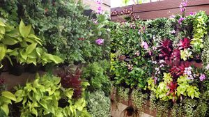 แต่งสวนแนวตั้ง แต่งสวนสวยอย่างสร้างสรรค์ ด้วยเทคนิคบริหารพื้นที่