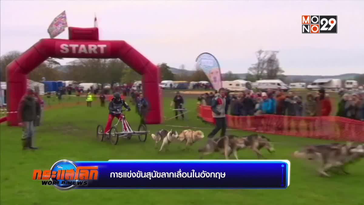 การแข่งขันสุนัขลากเลื่อนในอังกฤษ