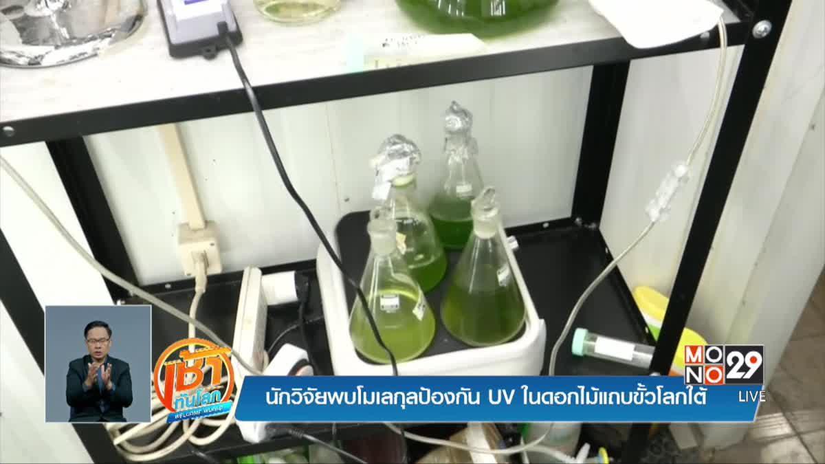 นักวิจัยพบโมเลกุลป้องกัน UV ในดอกไม้แถบขั้วโลกใต้