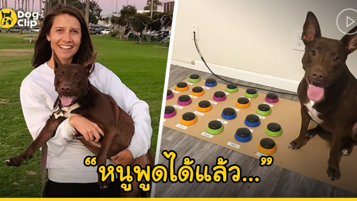 สุดทึ่ง! น้องหมาบอกความในใจด้วยอุปกรณ์สื่อสารที่นายสาวนักบำบัดสร้างให้และมันใช้ได้จริง!