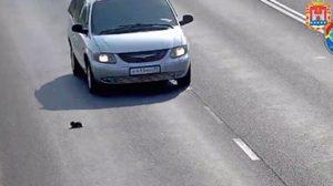 ฮีโรตัวจริง ช่วยชีวิตลูกแมวหวิดถูกรถทับบนทางด่วน