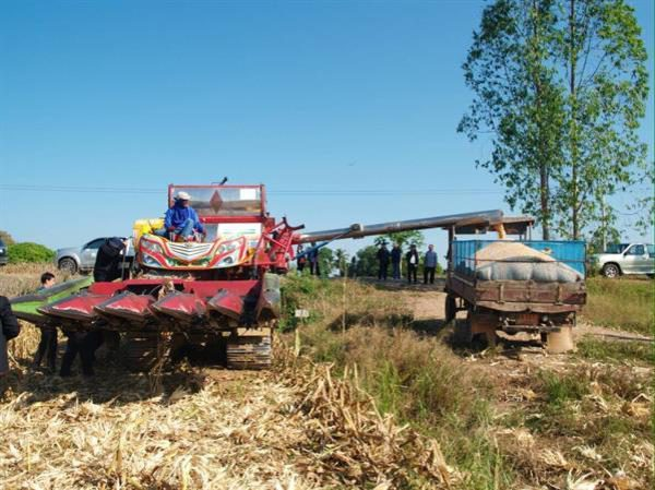 กระทรวงเกษตรฯ ยกอุตรดิตถ์ต้นแบบปลูกข้าวโพดหลังนา รายได้เฉลี่ย 8,365 บาท/ไร่