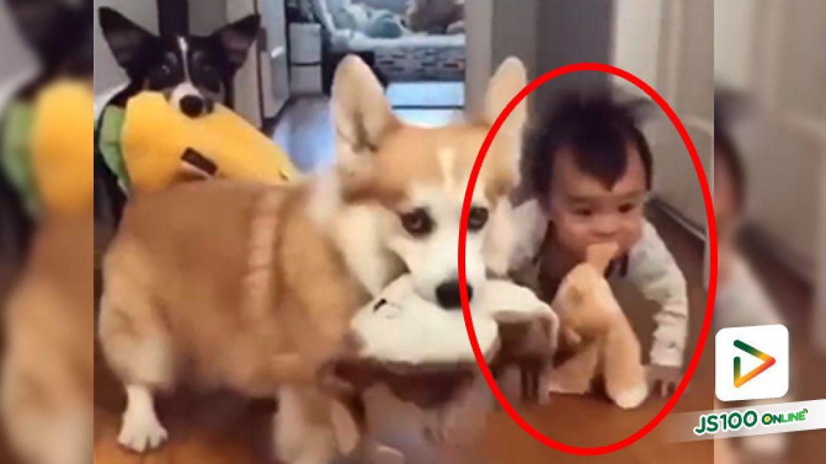 หลายคนบอก.. อย่าปล่อยลูกอยู่กับสุนัขตามลำพัง