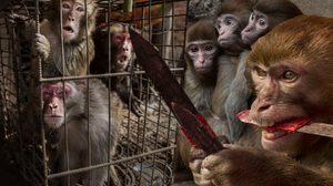 เสียงสะท้อนความเจ็บปวดฝึก 'ละครลิง' เข้าข่ายทารุณกรรมสัตว์ (ชมภาพ)