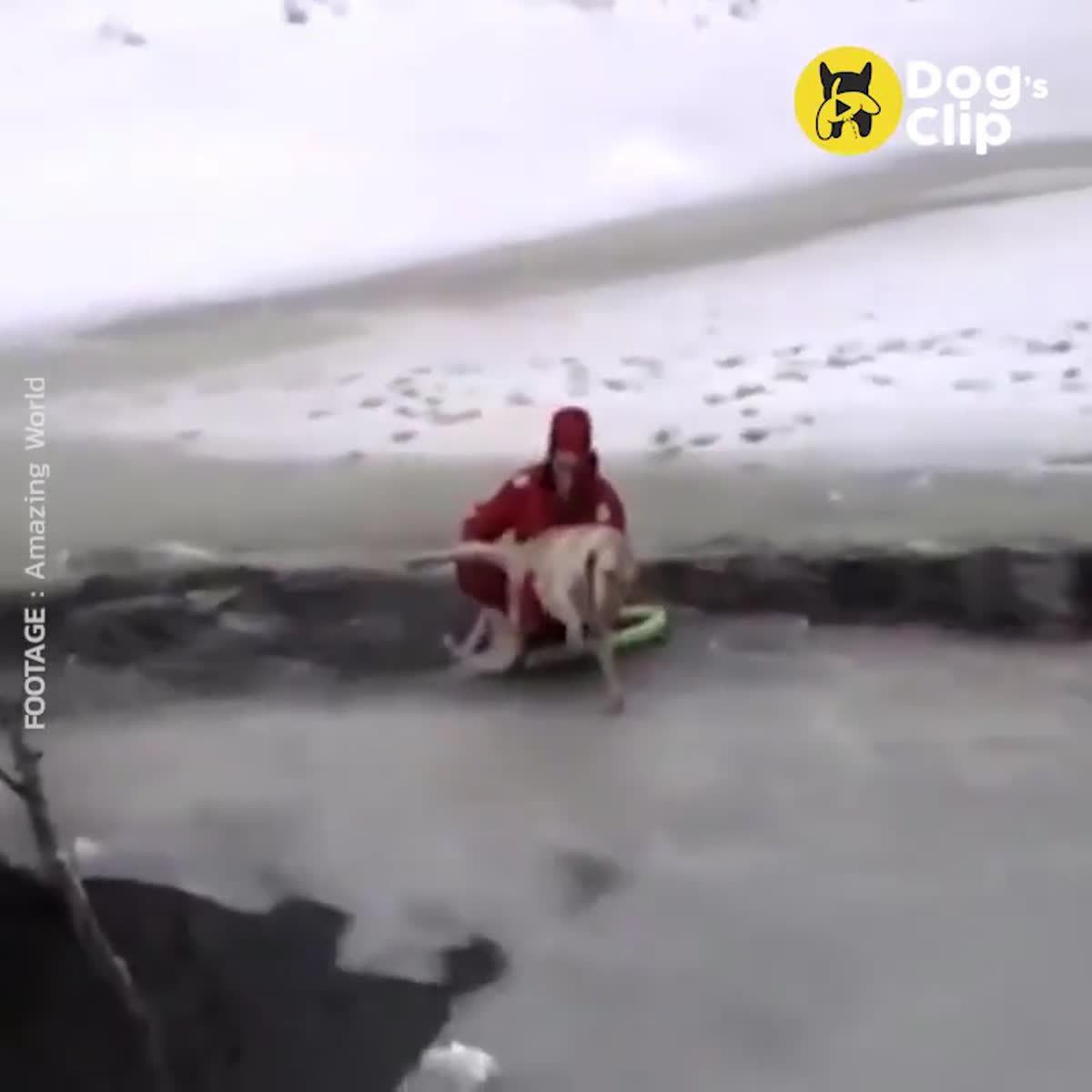 แรงเฮือกสุดท้าย ลาบราดอร์ ร้องขอความช่วยเหลือ รอดชีวิตจากธารน้ำแข็ง