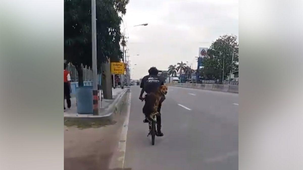 น้องหมาซ้อนรถจักรยานฟอร์มดีไม่มีตก (29-12-60)