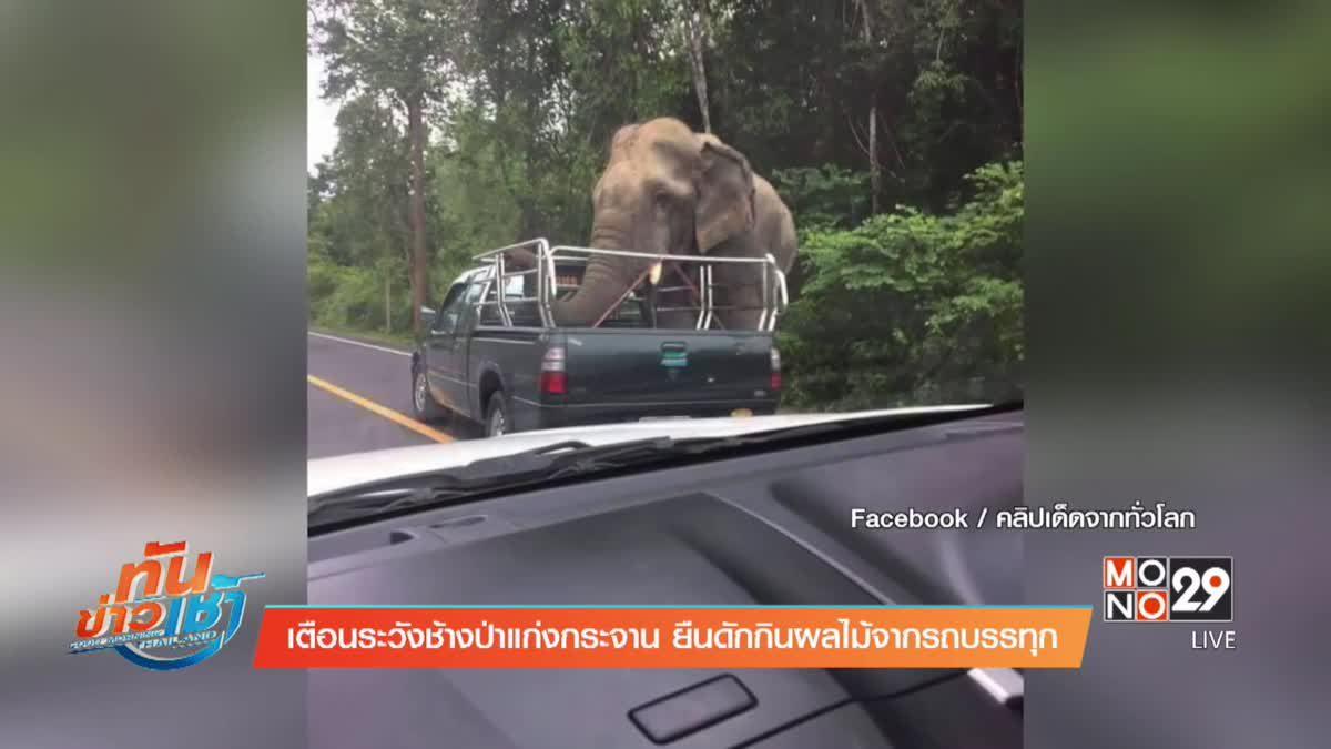 เตือนระวังช้างป่าแก่งกระจาน ยืนดักกินผลไม้จากรถบรรทุก
