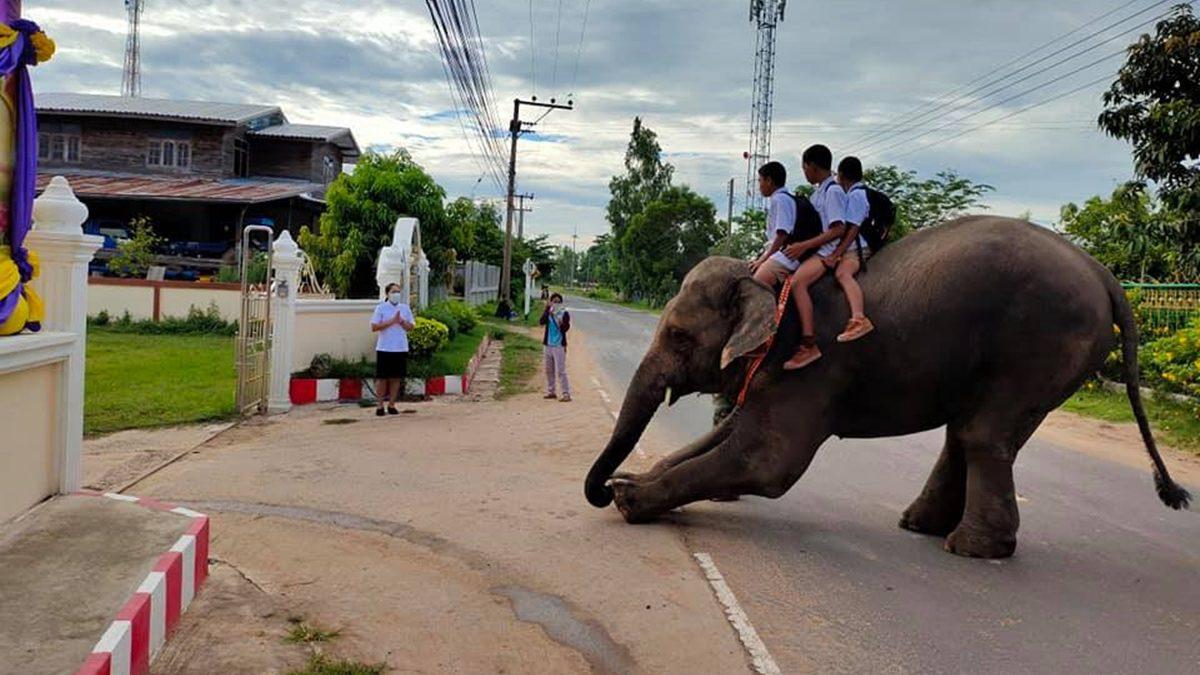 สีสันวันเปิดเทอม นักเรียนขี่ช้างไปโรงเรียน สมกับเป็นเมืองสุรินทร์ถิ่นช้างใหญ่