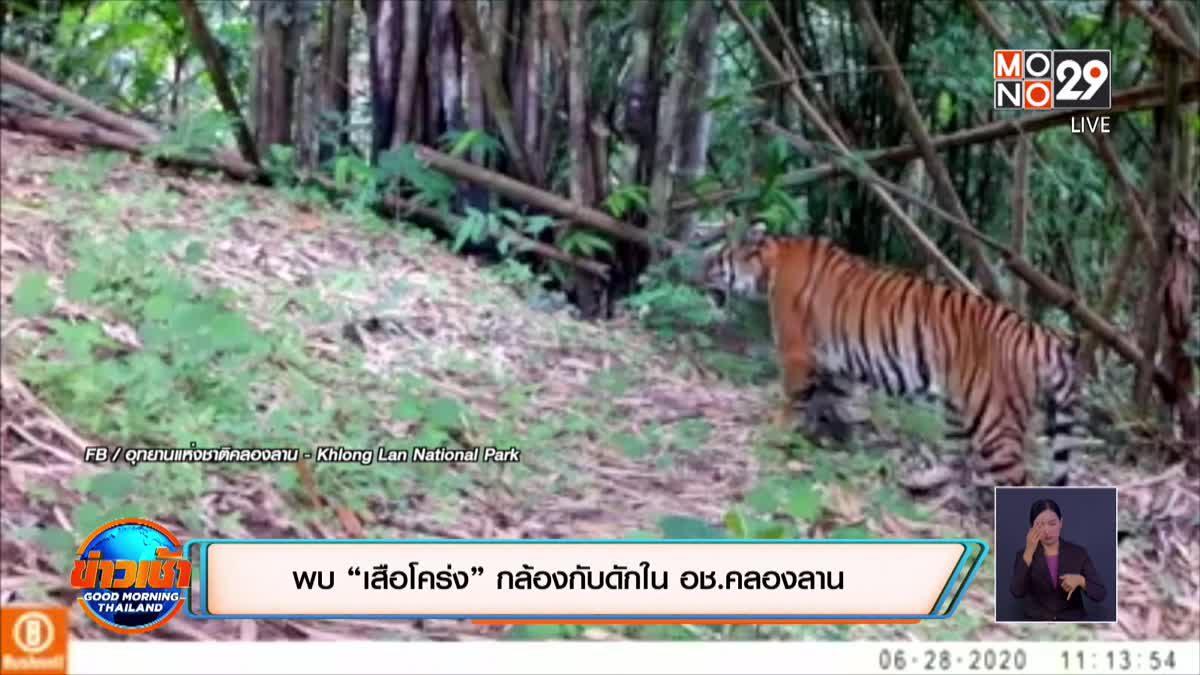"""พบ """"เสือโคร่ง"""" กล้องกับดักใน อช.คลองลาน"""