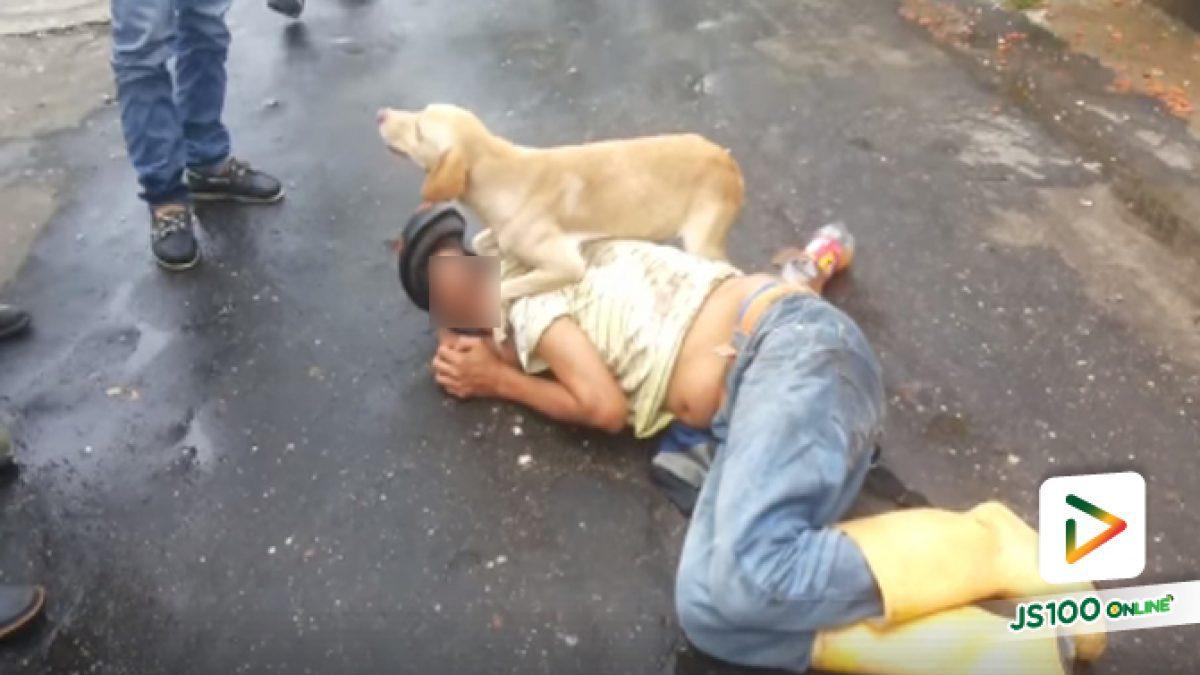 คลิปสุดซึ้ง! 'สุนัขแสนรู้ปกป้องเจ้านายประสบอุบัติเหตุ เหตุเกิดที่ต่างประเทศ (11-05-61)