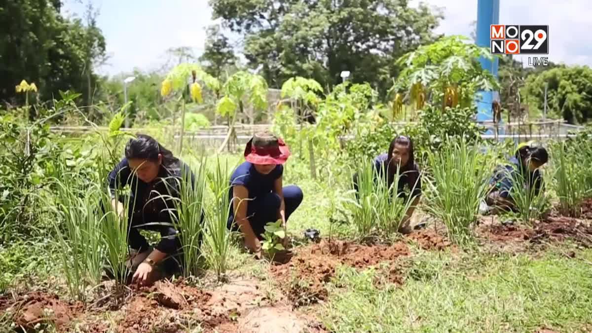 พช.ชาวอุบลร่วมใจ ปลูกผักสวนครัว รั้วกินได้